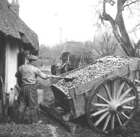 récolte pour le cidre