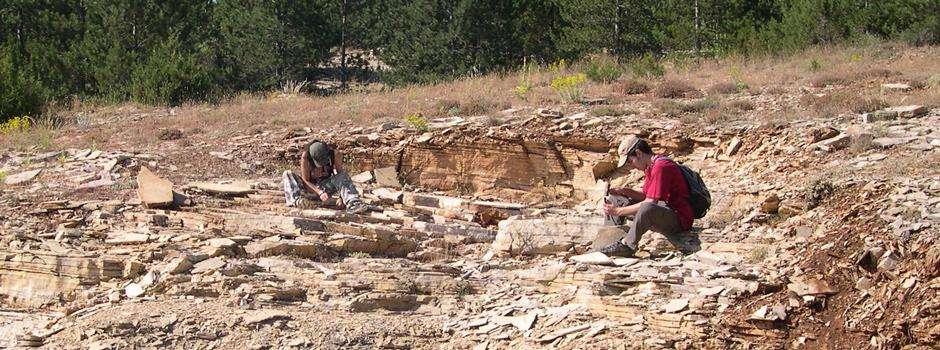 Les calcaires laminés du site de Hoyas où le petit mammifère a été découvert. © R. Vullo