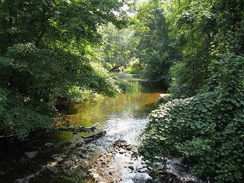 Forêt de feuillus aux États-Unis. © Licence Creative Commons P 3.0
