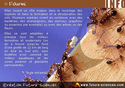 Histoire de fourmis