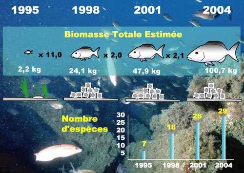 Exemple de colonisation par les peuplements de poissons d'un récif artificiel de 150 m3 au Cap Couronne. © Parc marin de la Côte Bleue