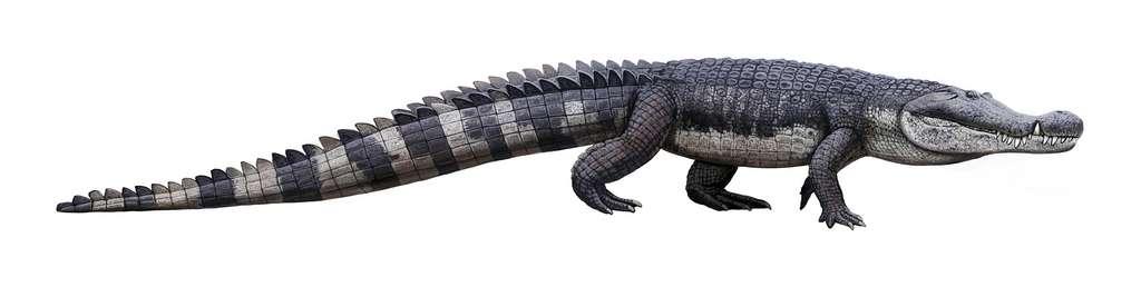 Voici une reconstitution de Deinosuchus schwimmeri, anciennement Deinosuchus rugosus. © Andrey Atuchin, Wikipédia, CC BY-SA 4.0