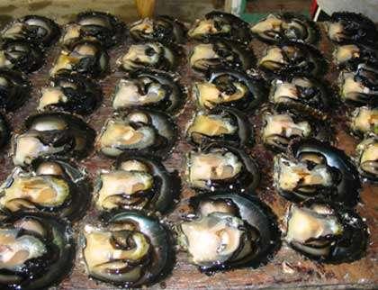 L'Ifremer étudie l'huître dans son milieu mais aussi en milieu contrôlé. © Ifremer