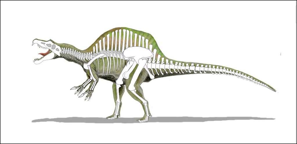 Spinosaure, l'un des plus longs dinosaures carnivores