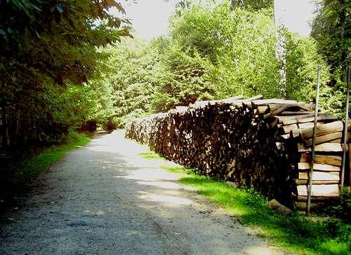 Exploitation du bois dans la forêt de Soignes. © Ben2, GNU FDL 1.2