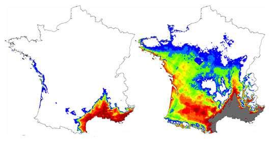 Figure 5 : Niche climatique potentielle du chêne vert, actuelle (à gauche), et à la fin du 21ème siècle (à droite).