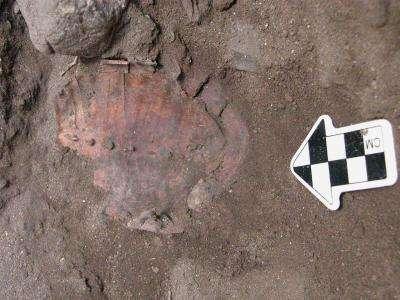 Un des restes d'une carapace de tortue retrouvée dans une fosse à Hilazon Tachtit Cave en Israël. La chair de toutes les tortues retrouvées ont permis de nourrir au moins 35 personnes, un beau festin pour l'époque. © Natalie Munro