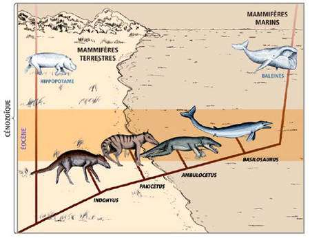 Transition vers les baleines © Florence Marteau, MHNG