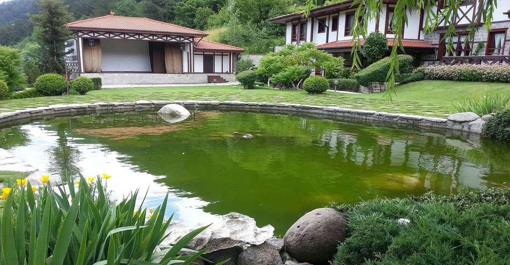 Bassin de baignade et zone végétalisée : quelles proportions ...