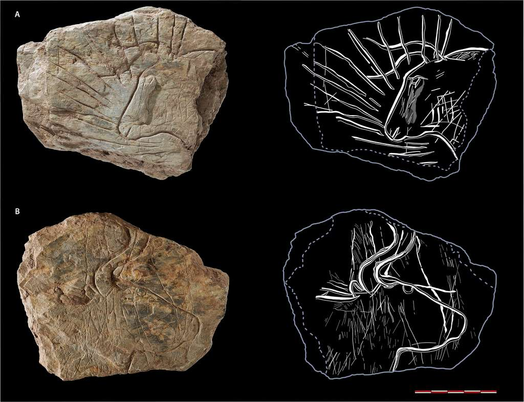 Les deux faces de la pierre dite du « taureau rayonnant ». Pourquoi l'artiste a-t-il ainsi auréolé la tête de l'auroch ? © N. Naudinot, C. Bourdier