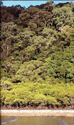 Une forêt tropicale humide contient plusieurs couches d'arbres, ou plutôt plusieurs strates de végétation. Cette complexité multiplie les niches écologiques exploitables par les animaux, et donc permet la coexistence d'une énorme biodiversité. © François Catzeflis
