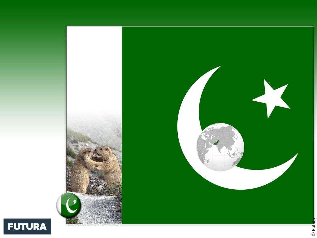 Drapeau : Pakistan