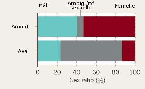 On note une très grosse augmentation du nombre d'individus à ambiguïté sexuelle lors des analyses faites en aval de l'usine pharmaceutique. © Sanchez et al., 2011/Adaptation Futura-Sciences
