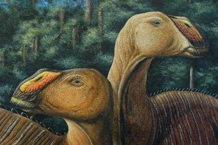 Avec son bec appuyé sur des mâchoires musclées et cachant huit cents dents, Gryposaurus monumentensis pouvait croquer sans souci n'importe quelle plante. © Larry Felder