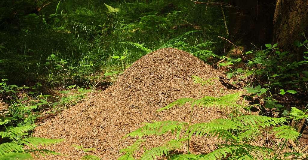 La construction du nid. © Nilfanion - CC BY-SA 4.0