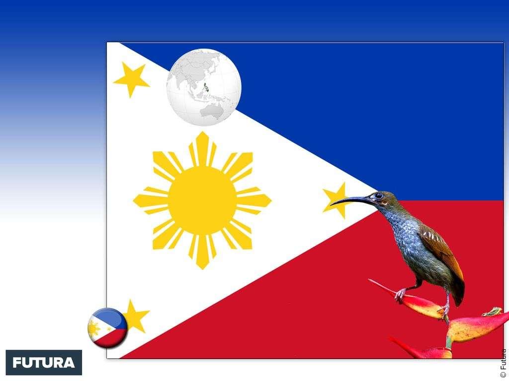 Drapeau : Philippines