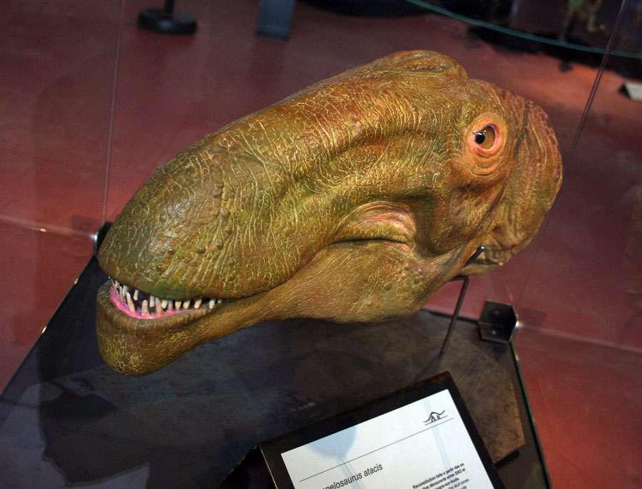 Ampelosaurus moulage de face