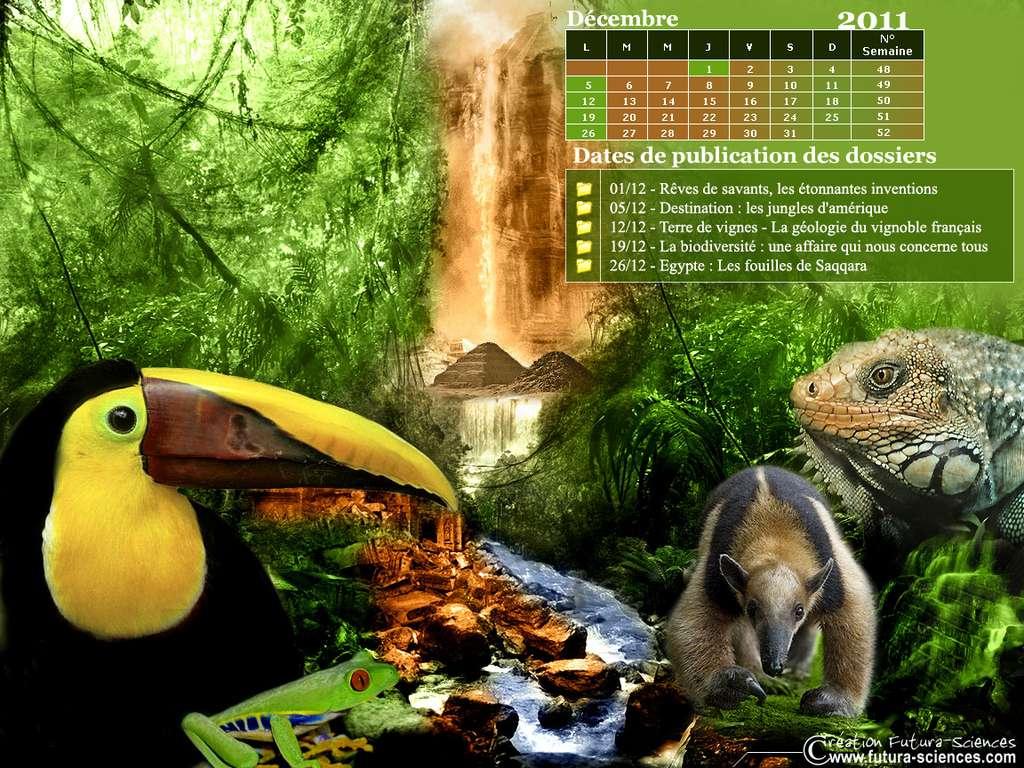 Calendrier Décembre 2011