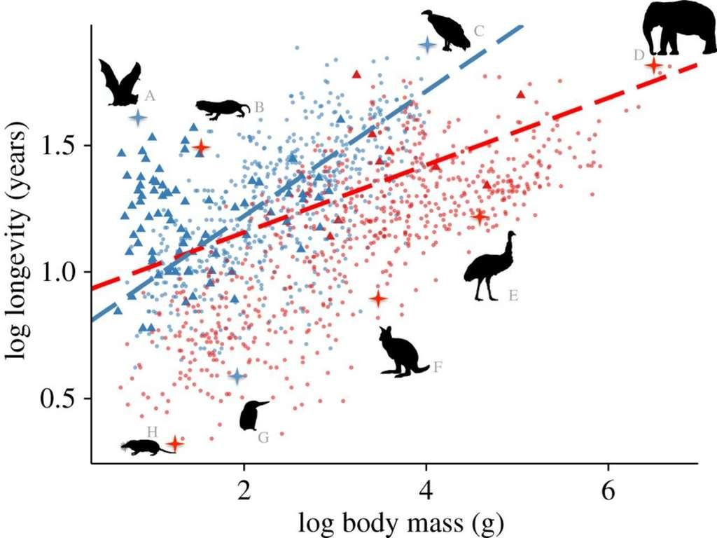 On observe une corrélation entre la taille d'une espèce et sa durée de vie. © Kevin Healy et al, Proceedings of Royal Society B, 2014