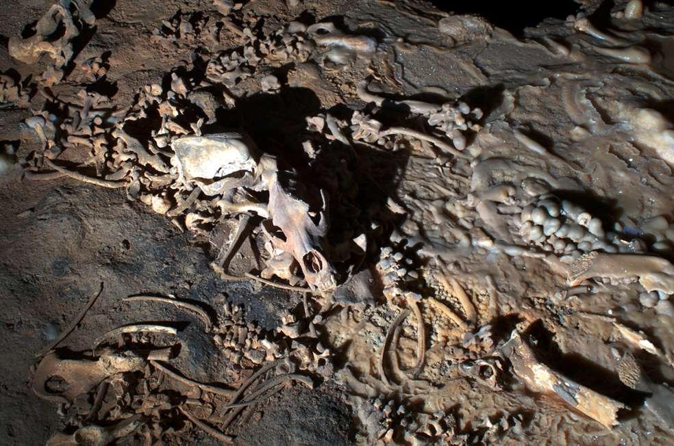 Ossements d'ours dans la Salle Hillaire de la grotte Chauvet