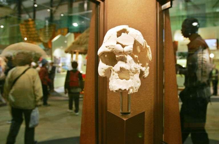 Réplique d'un crâne d'Homo sapiens idaltu datant d'environ 160.000 ans et découvert en Éthiopie ; elle est exposée à Nagakute, au Japon (photo prise le 22 avril 2005). © Kazuhiro Nogi, AFP