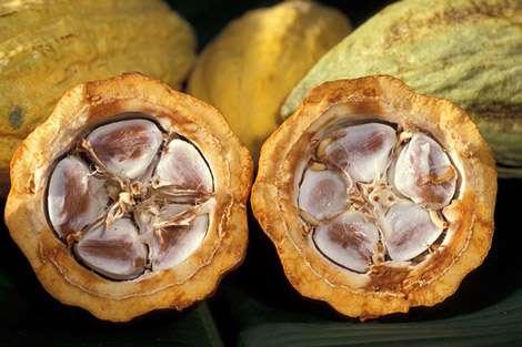 Fèves de cacao dans leur cabosse. © Wikipédia