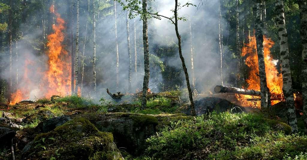 Feux de forêt. © Ylvers, DP