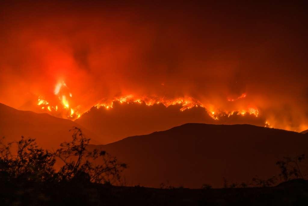 Une catastrophe survenue il y a 12.800 ans a provoqué l'embrasement de près de 10 % des forêts de la planète. © Glenn Beltz, Flickr