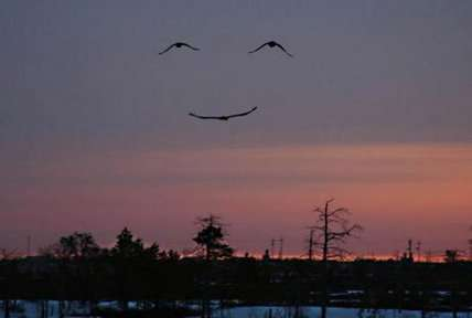 Un sourire de la nature