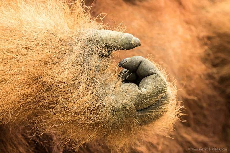 Aidons-les en n'utilisant plus d'huile de palme. © Maxime Aliaga, tous droits réservés