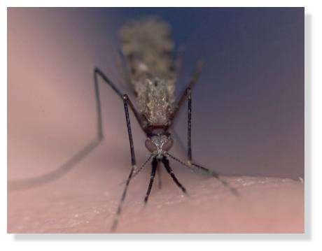 Comment se protéger des piqûres de moustiques ? © Institut Pasteur