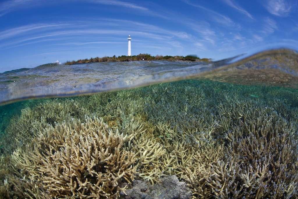 Les récifs situés à plus de 20 heures de Nouméa comptabilisaient le plus de biomasse. © Ethan Daniels, Shutterstock