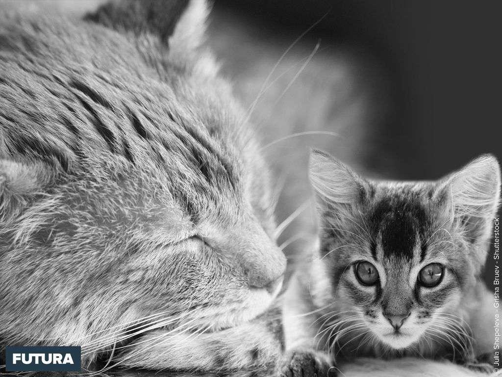 Noir et blanc duos de chats amis de l'homme
