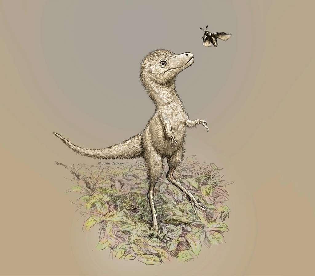 Vue d'artiste d'un bébé tyrannosaure. © Julius Csotony