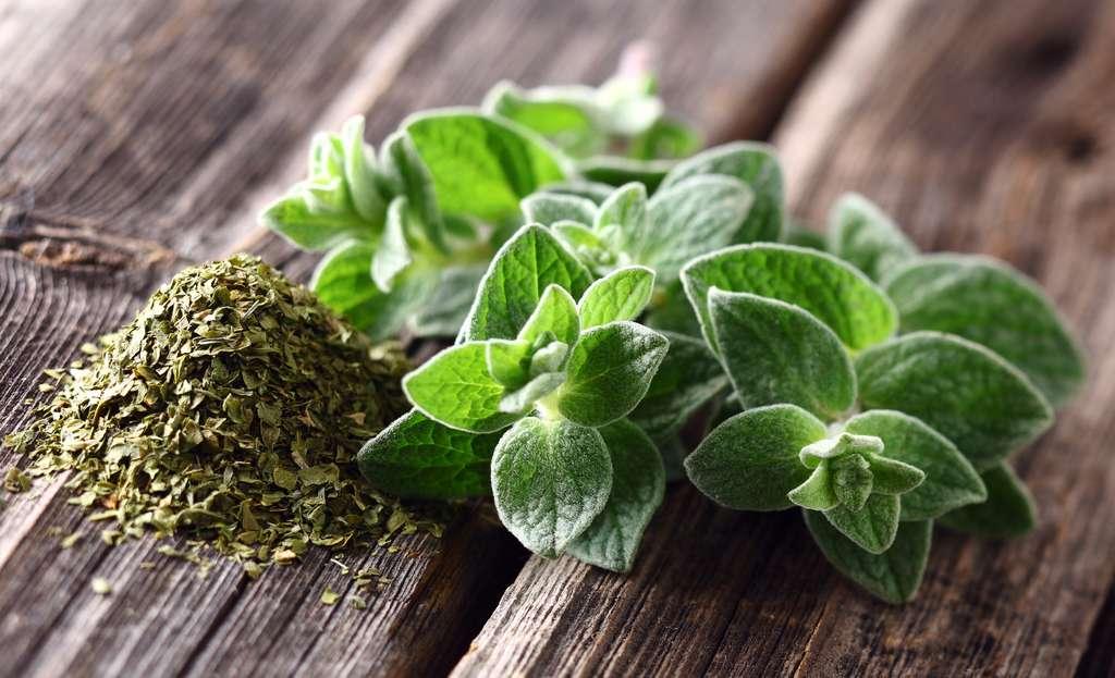En plus d'être une plante aromatique, l'origan possède des vertus médicinales. © Dionisvera, Fotolia