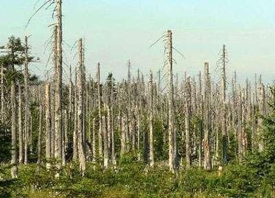Forêt et pluie acide.
