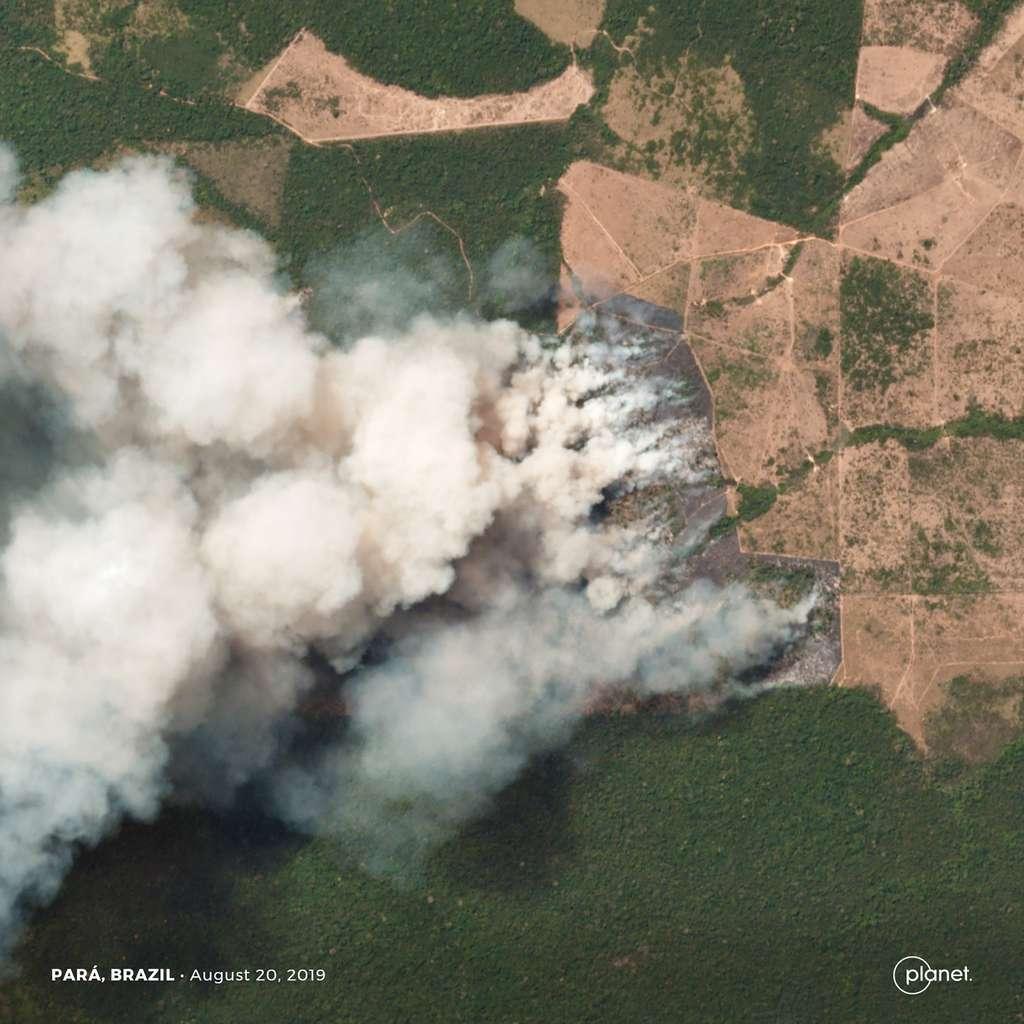 Cette image satellite montre les incendies qui ravagent des zones forestières, agricoles et d'élevage dans l'État du Pará au Brésil. La zone observée couvre une superficie de 5 km × 5 km avec une résolution de 3,7 mètres. Les détails les plus petits visibles mesurent environ 11 mètres. © 2019 Planet Labs, Inc.
