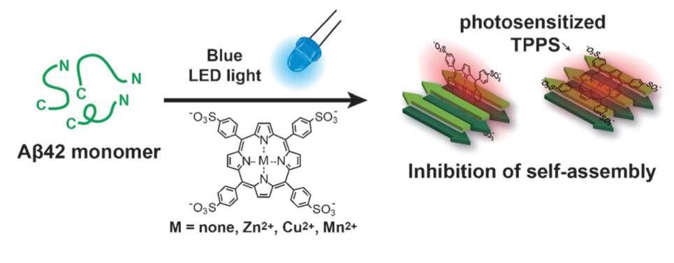 Les porphyrines (photosensitized TPPS, pour meso-tetra(4-sulfonatophenyl) porphyrine) stimulées par la lumière bleue (Blue LED light) inhibent l'assemblage des protéines amyloïdes (self-assembly). © KAIST