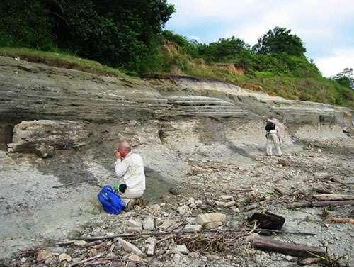 Affleurement de sédiments miocènes, berge de l'Amazone, Iquitos (Pérou), © IRD/ P. Baby Reproduction et utilisation interdites