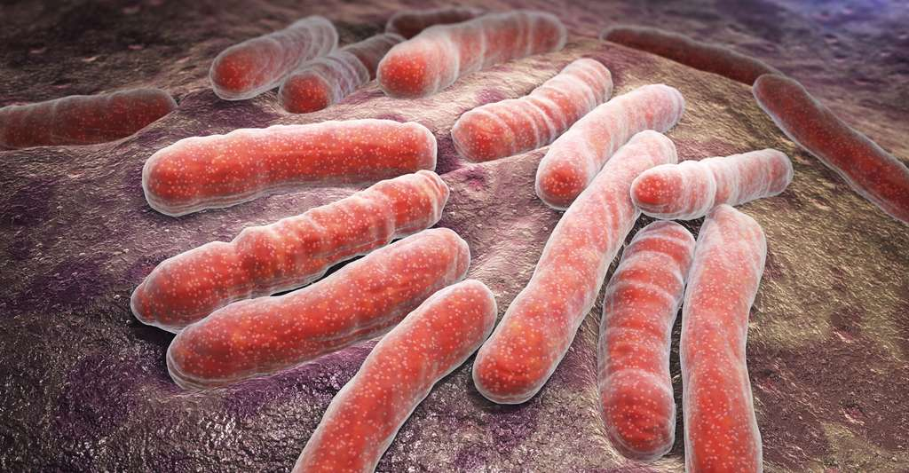 Le vaccin contre la tuberculose fut mis au point par Calmette et Guérin. Ici, Mycobacterium tuberculosis. © Tatiana Shepeleva, Shutterstock
