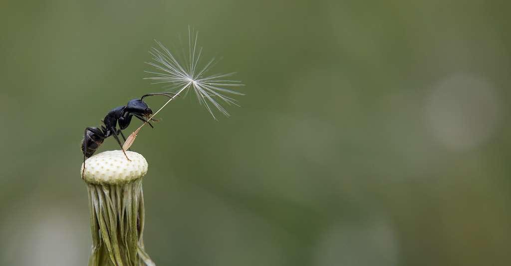 L'être humain n'est pas la seule espèce à domestiquer et protéger les proies des prédateurs... © thithawat, Adobe Stock