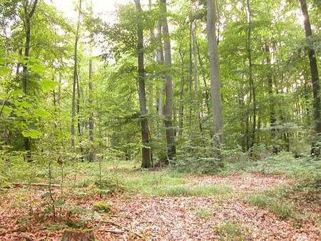 L'exploitation de la forêt (la foresterie) peut se faire dans une optique de développement durable et de respect de la faune du sol. © Oliver Herold - Creative Commons Attribution 3.0 Unported license.
