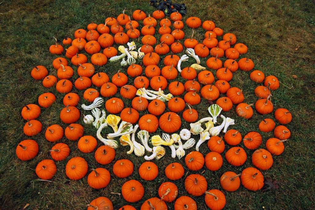 Halloween, une fête automnale