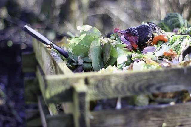 Feuilles de salade, épluchures... tout pour faire un bon compost. © Herb007, Pixabay, DP