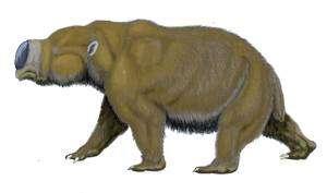 Le Diprotodon mesurait 3 mètres de long pour 2 mètres au garrot. C'était un des plus imposants animaux du Pléistocène australien. © Dmitry Bogdanov CC by