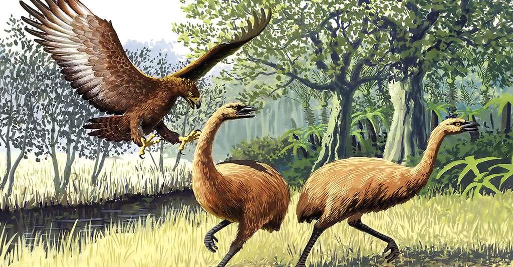 Aigle géant de Haast attaquant des Moas de Nouvelle-Zélande. © John Megahan, CC By 2.5