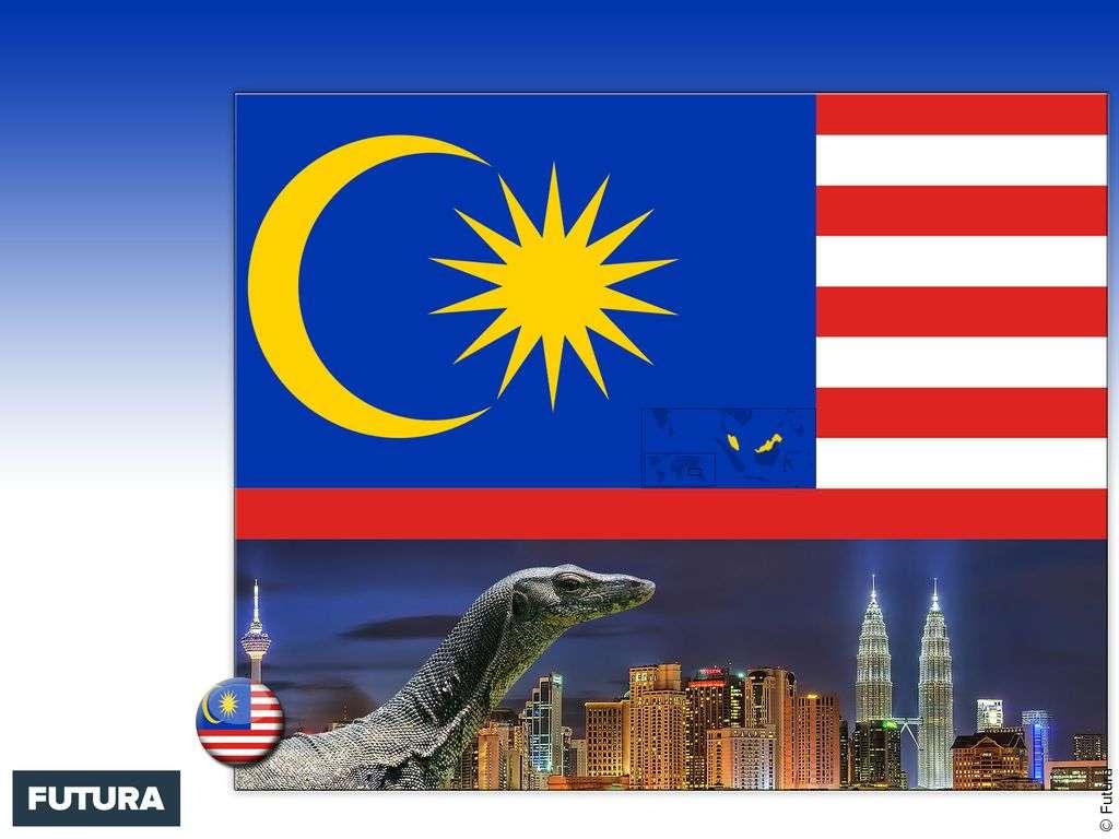 Drapeau : Malaisie