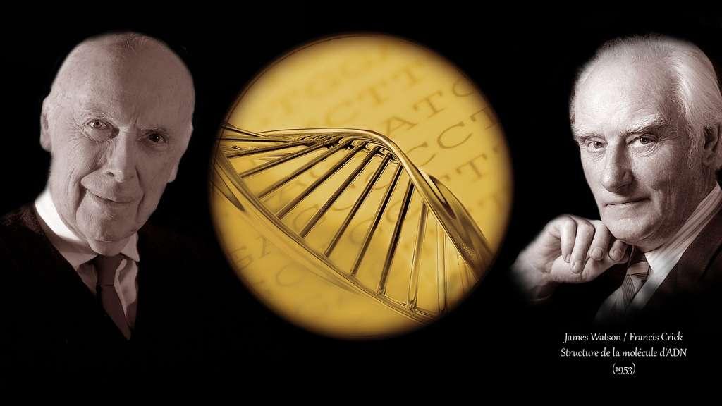 James Watson et Francis Crick, à l'origine de la structure de l'ADN