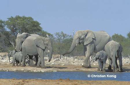 Les grands et les petits, Namibie