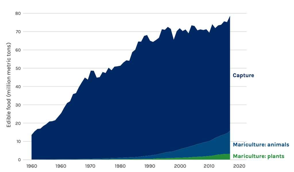 La pêche procure aujourd'hui la grande majorité de la nourriture issue de la mer. Mais il existe un énorme potentiel pour l'élevage d'algues et de mollusques. © High Level Panel a Sustainable Ocean Economy